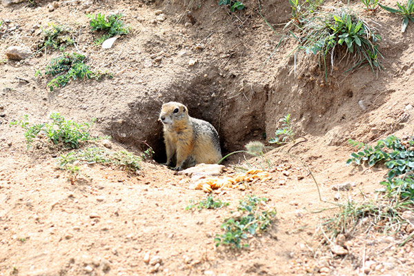 7 Animals That Dig Holes In Yards