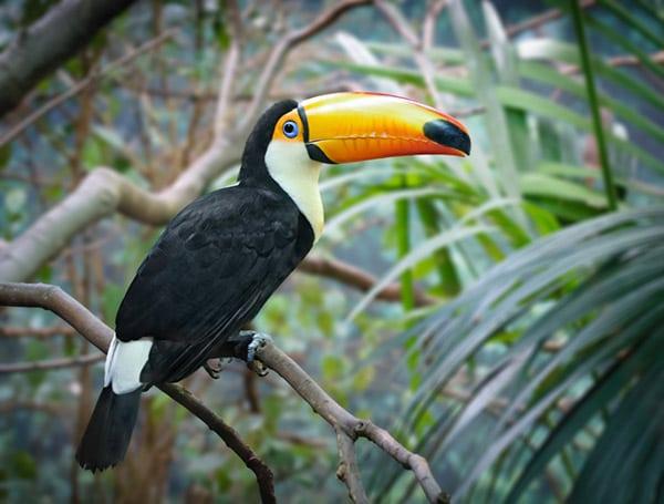 15 Bird Species With Long Beaks
