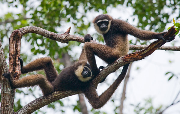 15 Small Monkey Breeds